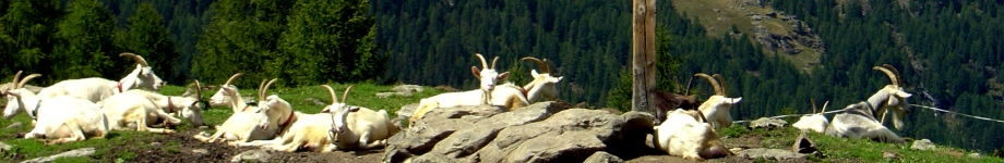 Scoprire l'Alto Adige Rotating Header Image